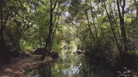 洋光下的森林小溪