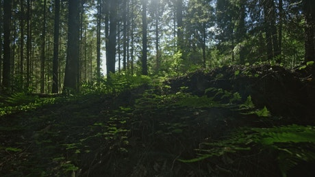 寂静得森林