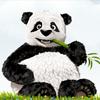 Tinypng 免费压缩PNG图像